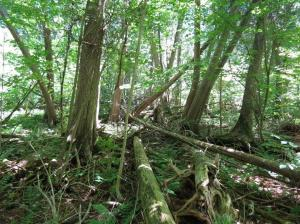 Cedar grove - Stittsville